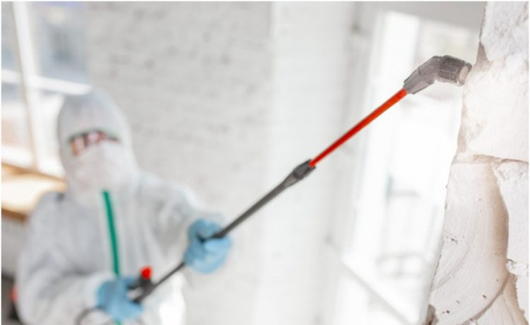 All you want to know about mold remediation process
